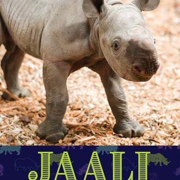 Potter Park Zoo's Black Rhino Calf Heading to a New Home in the Fall